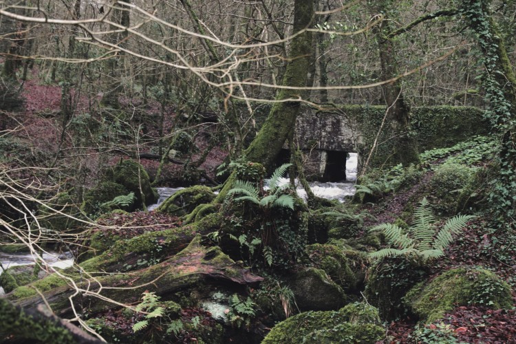 Kennall Vale Nature Reserve, Ponsanooth, Falmouth, Cornwall, Travel guide,