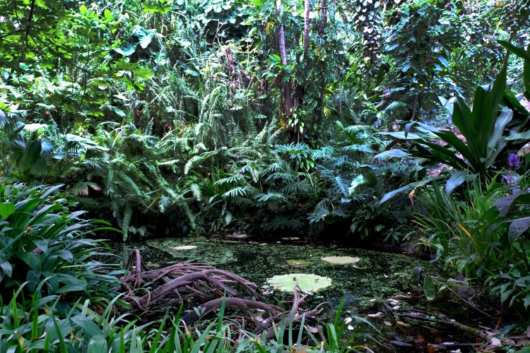 ferns-and-lake-eden-project