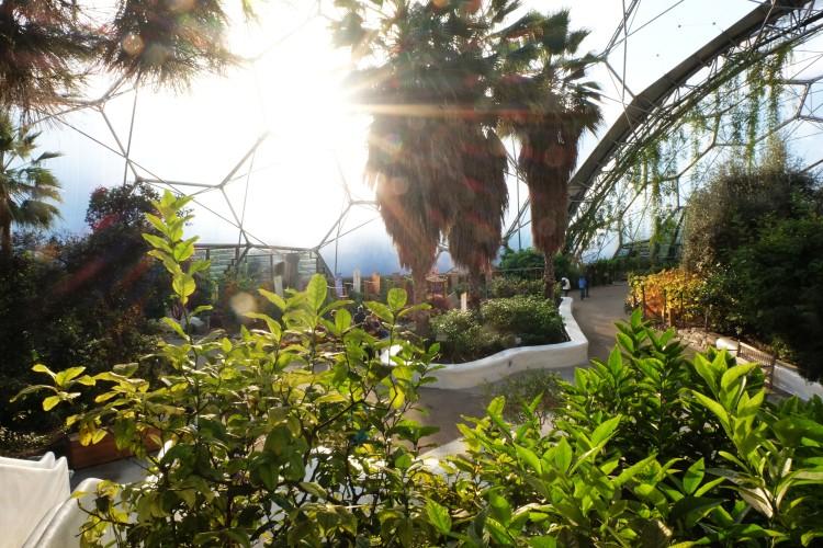 mediterranean-biome-setting-sun