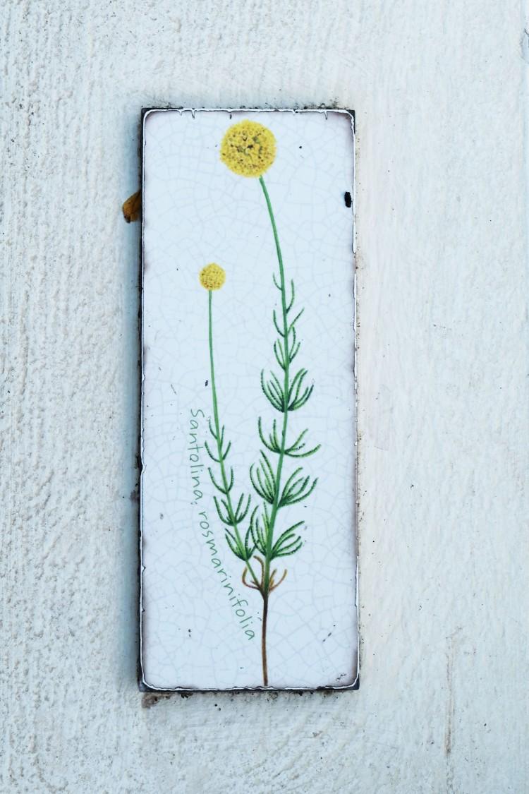 plant-tile-mediterranean-biome-eden-project