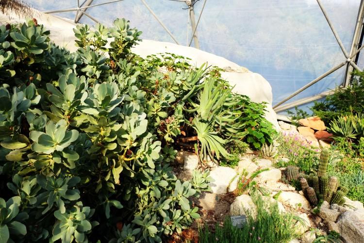 succulents-eden-project
