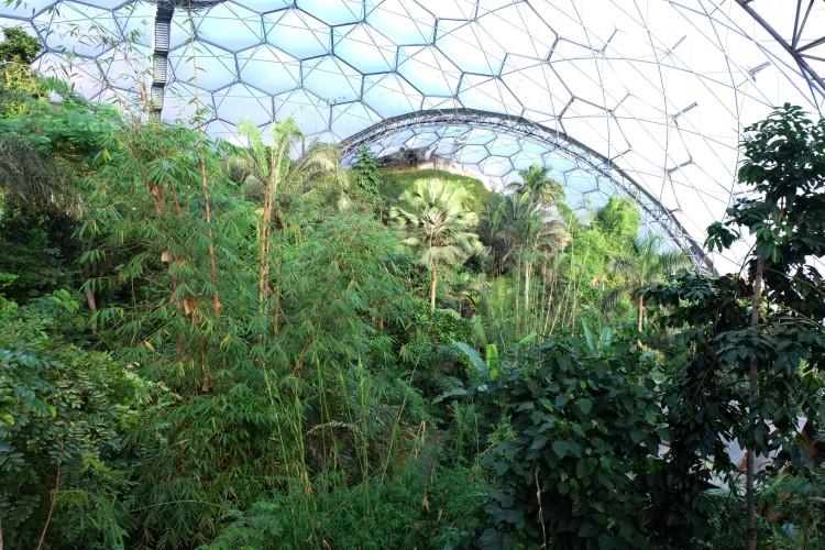tropical-biome-trees